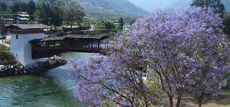Bhutan Spring